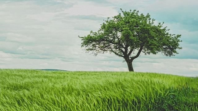 Kumpulan Kata Kata Bijak Kejujuran yang Paling Jujur Dalam Kehidupan
