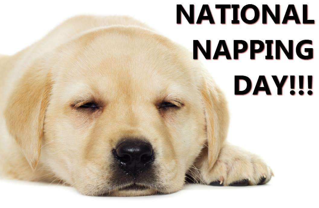 National Napping Day Wishes Photos