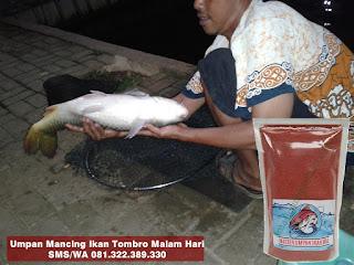 Umpan Ikan Mas Tombro Khusus Malam Hari