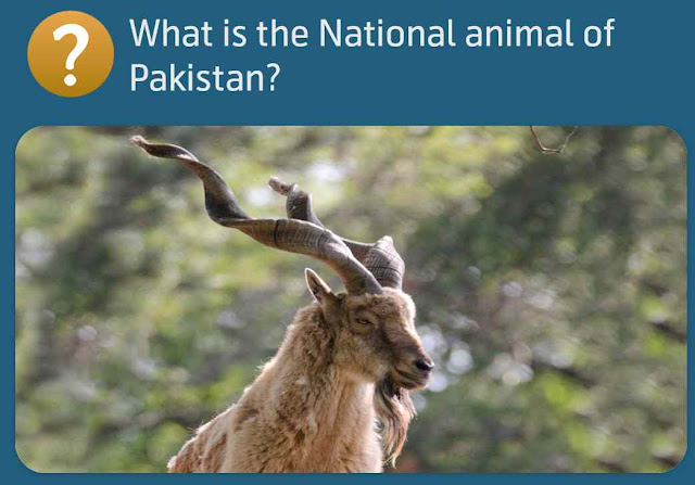 What is the National animal of Pakistan?