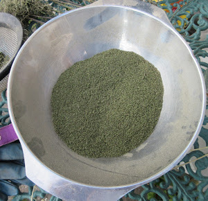 Dried sieved nettle seeds