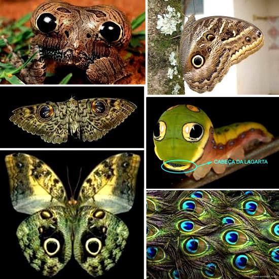 Formas de olhos em animais para enganar predadores