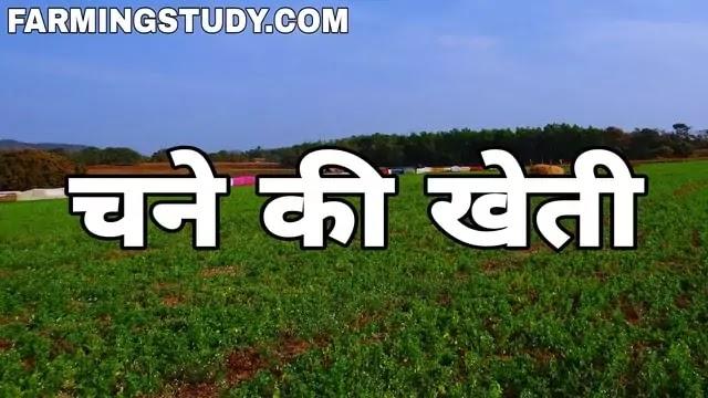 चने की खेती कैसे करें?, chane ki kheti, चने की खेती कैसे की जाती है?, चने की बुवाई कब की जाती है, चने की किस्में, काबुली, डालर एवं विशाल चने की खेती,