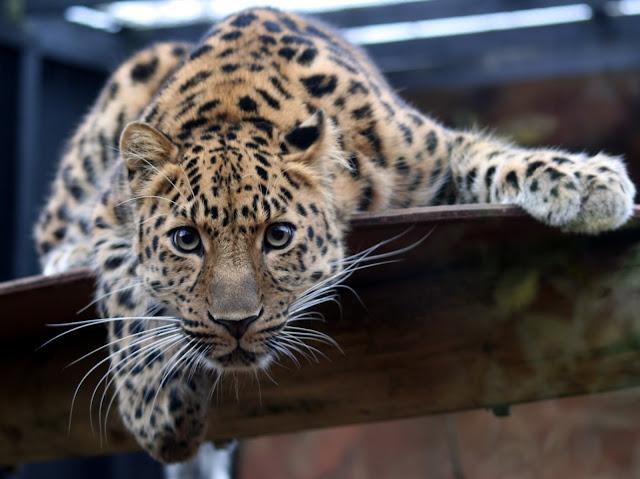 Inilah Daftar 10 Hewan Paling Langka di Dunia Saat Ini