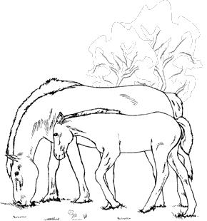 Ausmalbild Pferde Fohlen - Kinder zeichnen und ausmalen