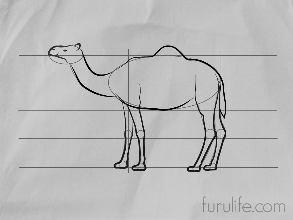 How to draw Camel - Step 6