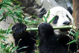 Aquellos algoritmos de Google: Qué hacíamos para evitar al Panda 3