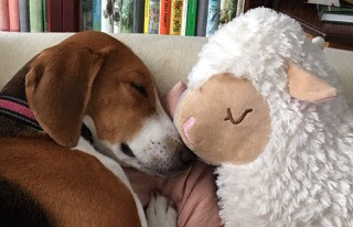 Romance writer Jen Gilroy's dog sleeping: The Writer's Pet