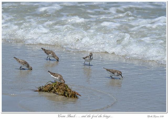 Crane Beach: ... and the food she brings...