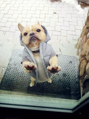 Foto divertida de perro queriendo entrara a casa.