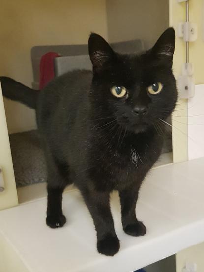black cat standing in cat pen