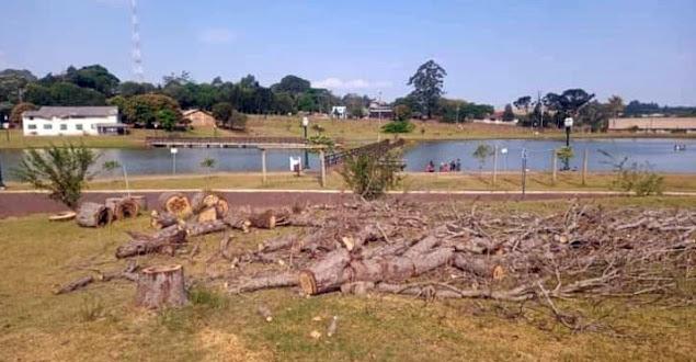 Mamborê: Corte de árvores no Parque do Lago gera reclamações