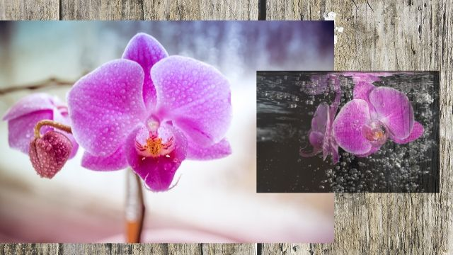 Orchids care for new Orchids Lovers