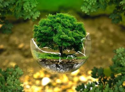Puisi Tentang Lingkungan dan Alam