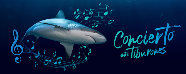 Concierto de Tiburones