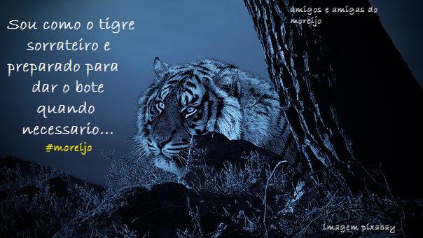 Imagenes De Tigres Con Frases Tatuajes Pequeños
