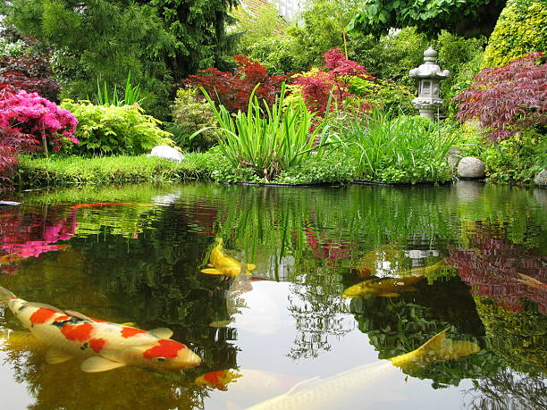 Koi Ponds – An Introduction to Koi Fish