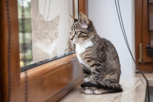 القطط تكره الشعور بالوحدة
