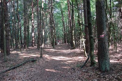 Szlak czerwony między Sochami a Florianką: las na terenie RPN