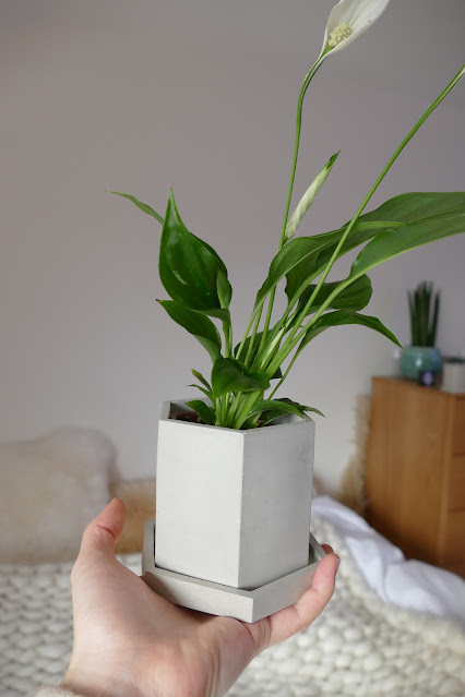 Poured Review etsy, poured etsy, concrete planter pots etsy, concrete pots etsy, concrete pots uk, etsy concrete pots, concrete plant