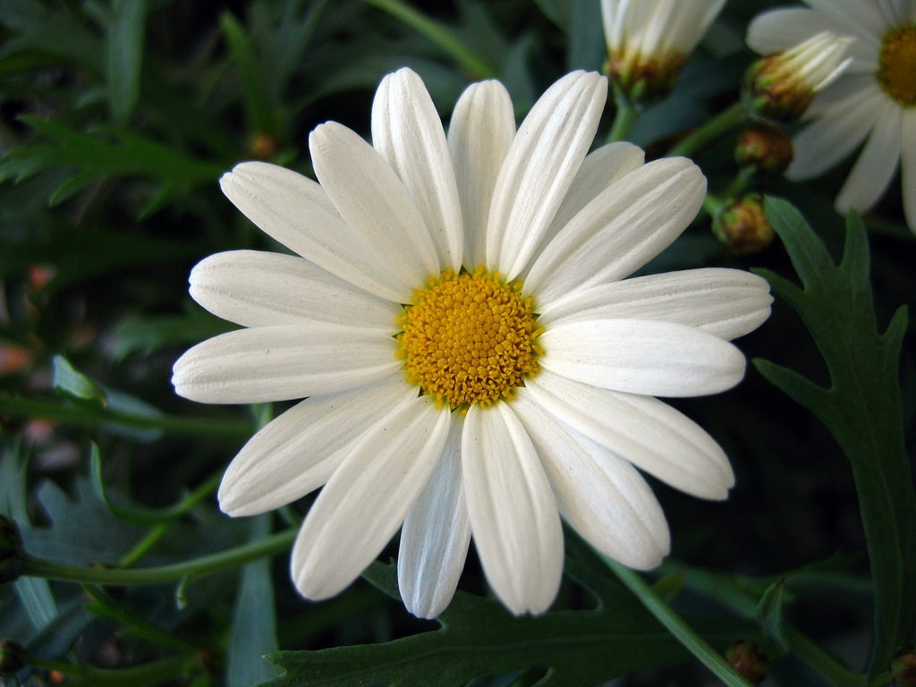 Birth flower for april credainatcon canada fl delivery blog flowers of the month april birth flower is the daisy izmirmasajfo