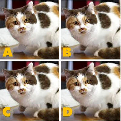 Which image is different? image 22
