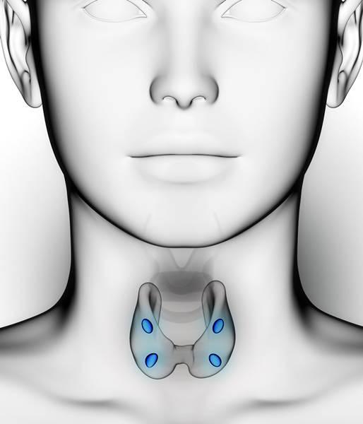 Hiperparatiroidismo enfermedad glándula tiroides