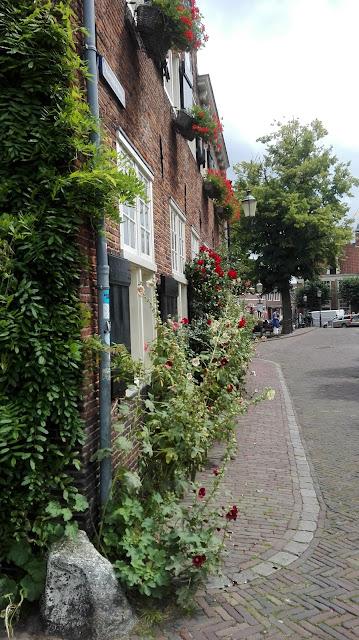 Huis in straatje met klimroos voor de deur in Amersfoort, gezien tijdens stadswandeling.