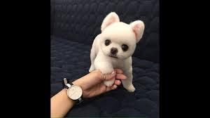 Best Puppy