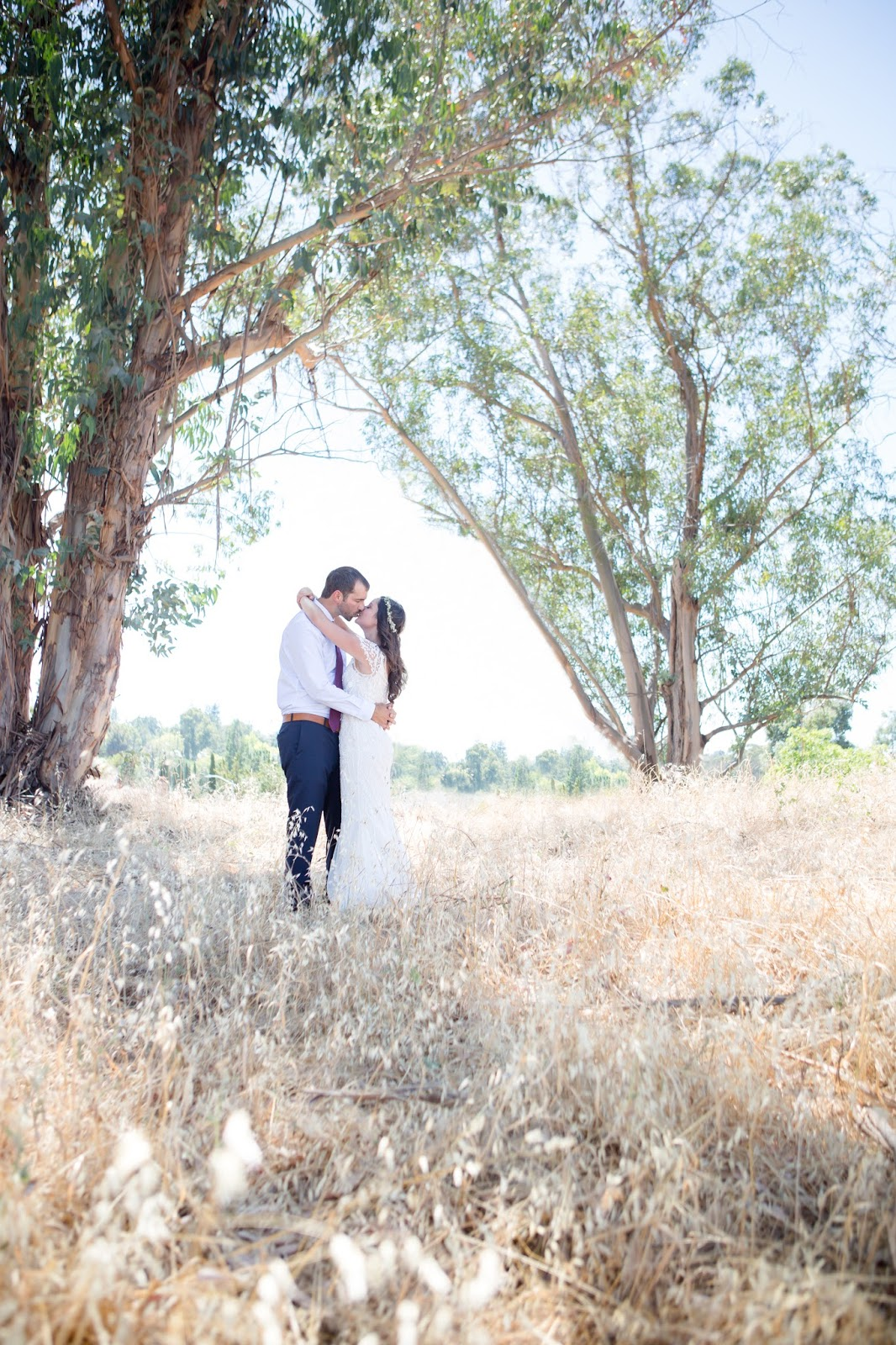 eucalyptus tree romantic photos