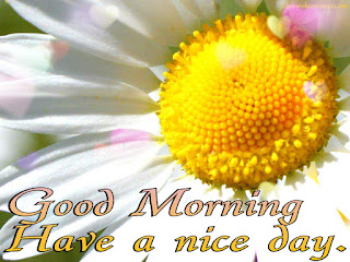 Happy Good Morning Messages