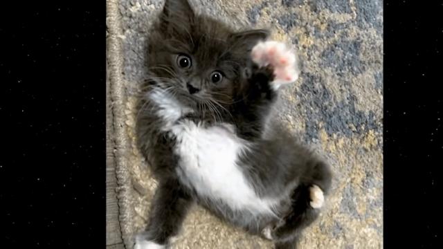 Серого котёнка, непохожего на других, бросили на произвол судьбы