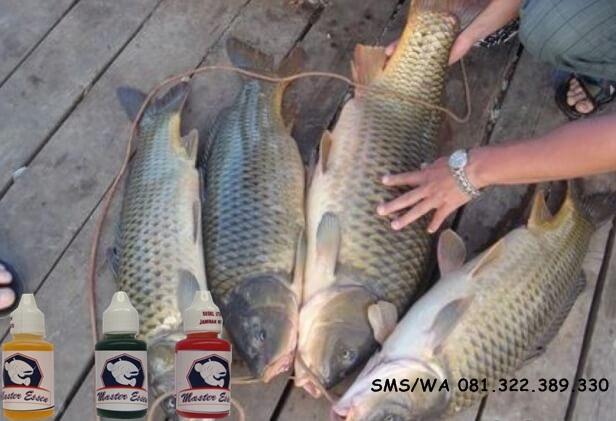 Toko Umpan Master Essen 100 Asli Original Essen Ikan Mas Khusus Babon