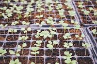 cara bisnis bibit tanaman, cara usaha bibit tanaman, bibit tanaman, cara bisnis bibit tanaman menguntungkan, cara usaha bibit tanaman laris, bibit, bibit tanaman