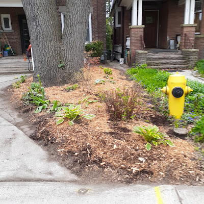 Toronto High Park North New Front Yard Makeover After by Paul Jung Gardening Services--a Toronto Organic Gardener