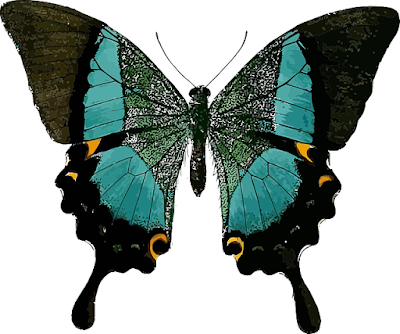 Gambar kupu kupu kartun untuk kolase