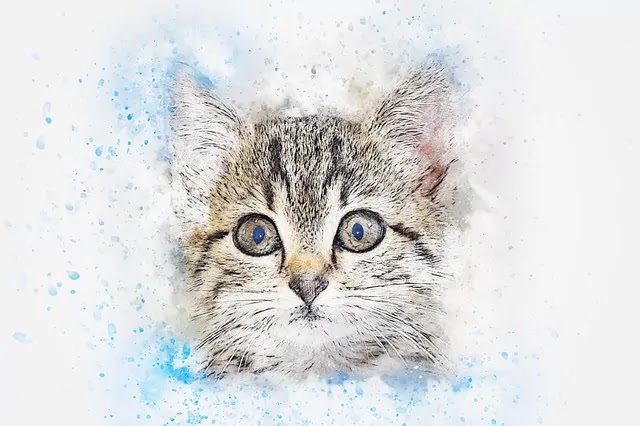 cat images drawing