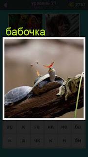бабочка сидит на спине у черепахи 21 уровень 667 слов