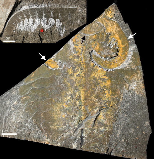 Major fossil study sheds new light on emergence of early animal life 540 million years ago