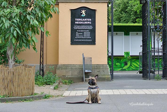 Besucht im Zoo Heidelberg