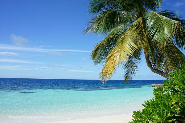 pantai dan rumput laut