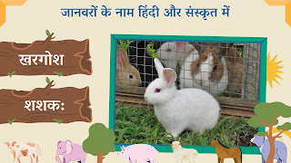 Rabbit name in sanskrit and hindi with images