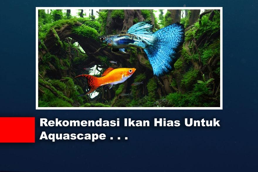 Rekomendasi Ikan Hias Untuk Aquascape