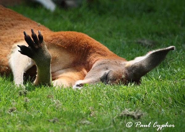 Một loạt hành động kỳ quặc ở động vật khi say xỉn