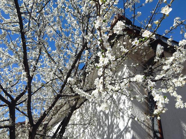 Proljeće je stiglo....