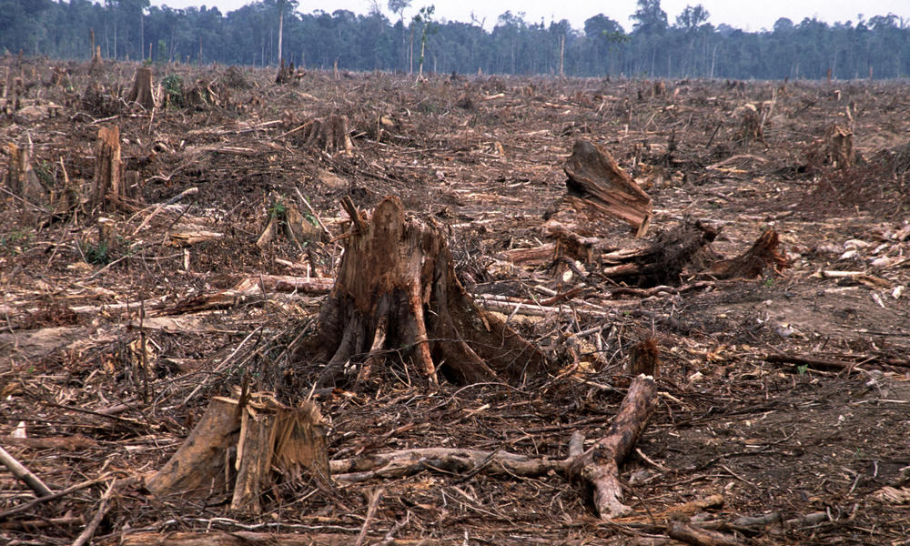 Natural Heritage: Scientists warn only 'simplified', degraded tropical forest may remain by end of century