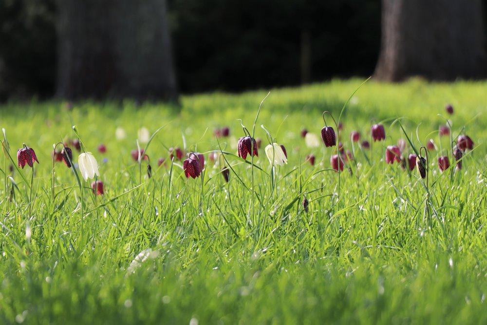 fotos jardines de Kew (Kew Gardens)