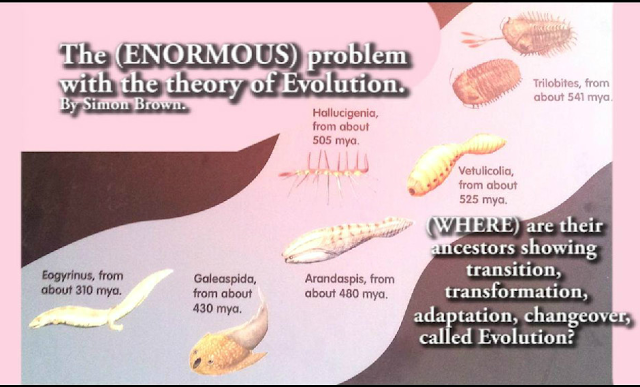 The Enormous Problem with the Theory of Evolution Diagram by Simon Brown www.realdiscoveries.info