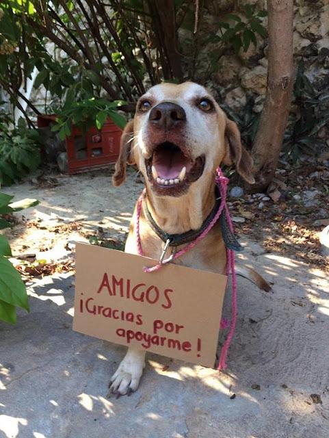 """""""MEUS AMIGOS, Obrigado pelo seu apoio!"""" (Imagem: Reprodução/©Vanessa Euán/Facebook)"""