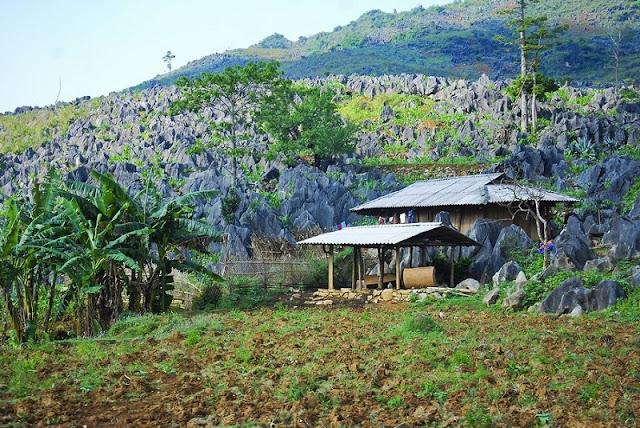 Tua Chua Karst Plateau 1